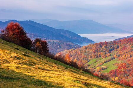 beautiful mountainous rural landscape at sunrise. trees in red foliage. wonderful scenery of carpathian countryside. sunny morning weather with clouds on the sky. fog in the distant valley