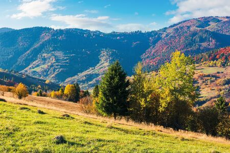 wonderful sunny autumn day in mountains. great views of carpathian rural landscape. trees in colorful foliage on the hill, grassy meadow on the slope. ridge in the distance beneath a sky with clouds Stock Photo