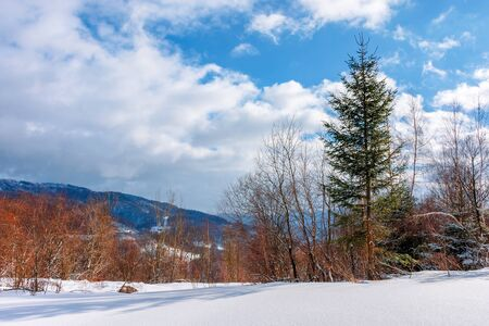 fir tree on the snowy meadow in wintertime. beautiful alpine scenery on a sunny day in mountains. wonderful weather with fluffy clouds on a blue sky