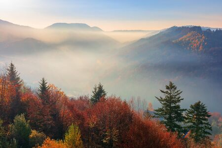 misty sunrise in mountains. wonderful autumn weather. beautiful nature scenery observed from the top of a hill. trees in colorful fall foliage. fog glowing in the distant valley 版權商用圖片