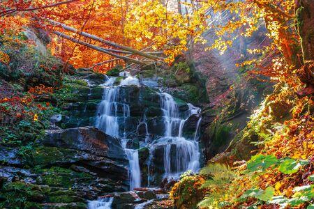 beautiful autumn scenery near the waterfall shypot. popular destination of Ukrainian Carpathians. trees in golden foliage. calm sunny weather in autumn. Stock Photo