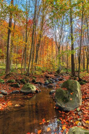 water stream among the rock in forest. beautiful nature scenery on a sunny autumn afternoon. crystal clear brook with some floating leaves. trees in colorful fall foliage. mossy boulders on the shore Stock Photo