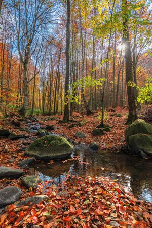 water stream among the rock in forest. beautiful nature scenery on a sunny autumn afternoon. crystal clear brook with some floating leaves. trees in colorful fall foliage. mossy boulders on the shore Фото со стока
