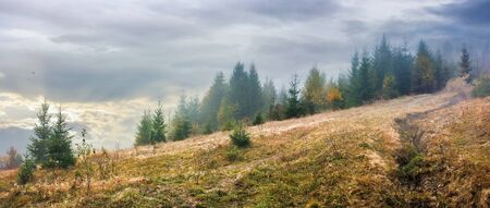 overcast misty weather in autumn at sunrise.  forest in haze on the meadow with weathered grass. Stock Photo