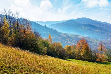 mountainous countryside on a sunny autumn day. trees in colorful foliage. distant ridge in haze. bright blue sky with clouds. beautiful rural area of carpathian landscape Stock Photo