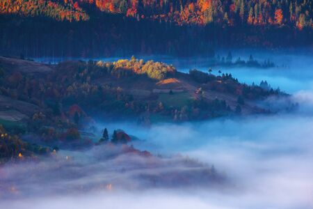 beautiful autumn landscape with valley fog. wonderful nature scenery at sunrise. trees in colorful foliage