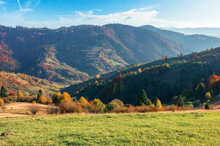 autumn sunny evening in mountain. beautiful countryside landscape. grassy meadow on the slope. trees in colorful fall foliage. fluffy clouds on the blue sky. hazy atmosphere