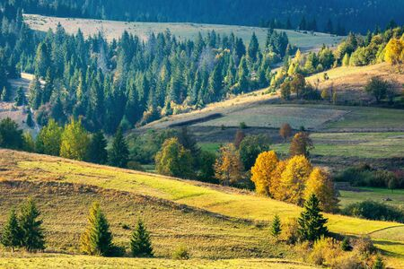 sunny autumnal rural scenery in mountains. beautiful landscape with rolling hills. trees in colorful foliage