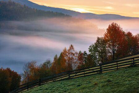 autumnal rural area in mountains at dawn. valley full of fog. trees in fall foliage. wooden fence on the grassy hillside