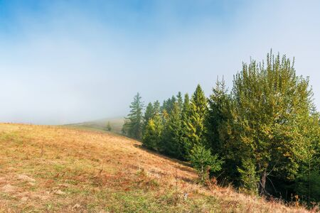 fir trees on the grassy hillside on foggy morning. wonderful autumn scenery. mysterious nature background Stock Photo