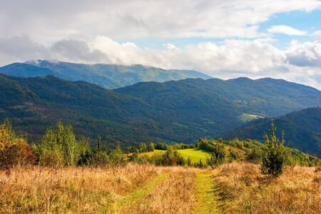 rural grassy fields near the forest on Carpathian hills. beautiful agricultural scenery in early autumn