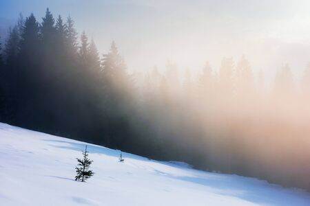 misty morning in the winter. spruce forest on a snow covered slope in glowing fog. wonderful nature scenery at sunrise
