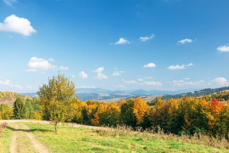 mountain autumn landscape. tree near meadow and forest on hillside under  sky with clouds Stock Photo