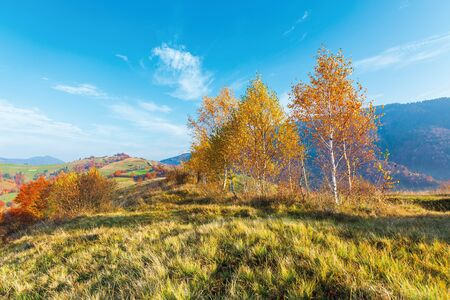 birch trees on the meadow in mountains. beautiful autumn landscape. trees in lush yellow foliage. village on the distant hill. wonderful countryside scenery at sunrise. sunny weather Stock Photo