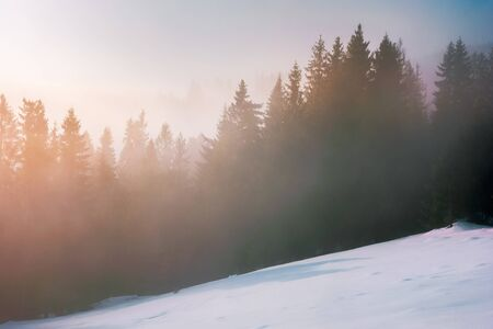 foggy sunrise in winter. spruce forest on a snow covered slope in glowing mist. beautiful nature scenery in the morning Stock Photo