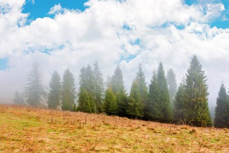 fir trees on the grassy hillside on foggy morning. breathtaking autumn scenery with clouds on the sky. magical nature background