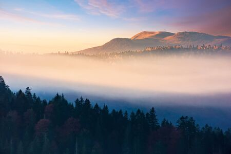 foggy dawn in mountains. amazing nature scenery in autumn. glowing mist among the hills. magic moment of fall season