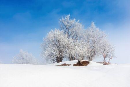 tees in brina su un prato coperto di neve. fantastico scenario invernale in una nebbiosa mattinata con cielo blu. concetto di minimalismo nel paesaggio delle fiabe Archivio Fotografico