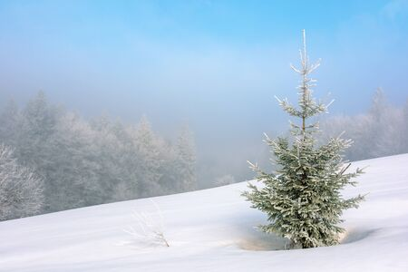 little fir tree on a snow covered meadow. mysterious winter scenery in foggy weather conditions. distant forest in haze