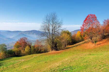 sunny forenoon in mountainous rural area. wonderful countryside autumn landscape. trees in colorful foliage on the grassy slope. distant ridge in haze Stock Photo