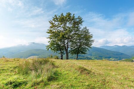 trees on the grassy meadow in mountains. beautiful sunny morning with cloudy sky. early autumn in green and blue