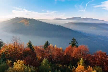 misty sunrise in carpathian mountains. amazing nature scenery in fall season. trees in red and orange foliage. distant ridge in hazy atmosphere beneath a blue sky Stock Photo