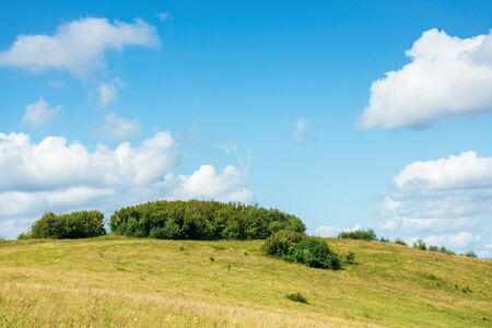 small forest on the hill. simple countryside scenery in early autumn or spring. blue sky with puffy clouds Stock Photo