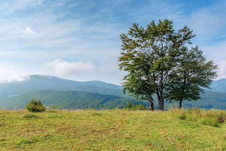 trees on the grassy meadow in mountains. beautiful sunny morning with cloudy sky. some fallen foliage on the groundearly autumn in green and blue Stock Photo