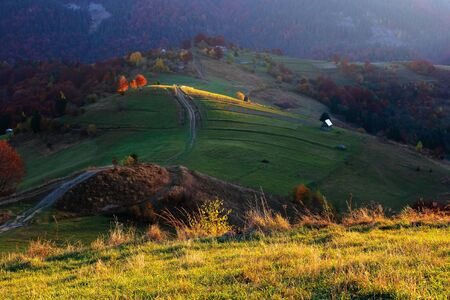 rural landscape at sunrise. beautiful autumn scenery in mountains. trees in fall foliage on rolling hills in dappled light. country road through grassy pasture.