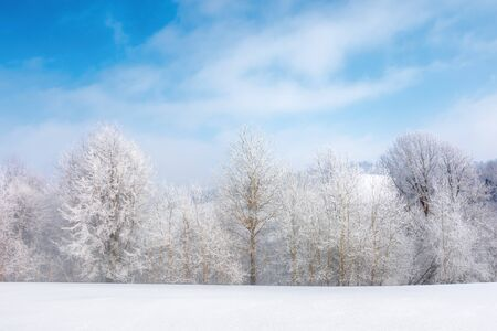 row of tees in hoarfrost on a snowy meadow.  fantastic winter scenery on a misty morning weather with blue sky and clouds. minimalism concept in fairy tale landscape