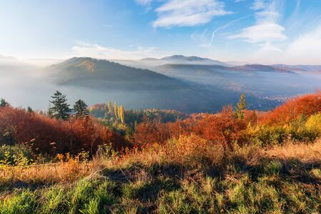 misty morning in carpathian mountains. gorgeous nature scenery in autumn season. trees in red and orange foliage. meadow in weathered grass. distant ridge in foggy atmosphere beneath a blue sky