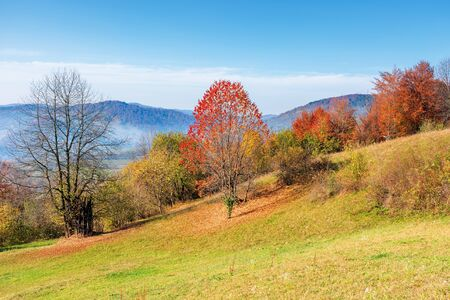 sunny forenoon in mountainous countryside. wonderful rural landscape in autumn. trees in colorful fall foliage on the grassy slope. distant ridge in haze Stock Photo