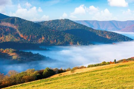 gorgeous sunny morning in mountains. picturesque carpathian countryside in autumn. fog in the valley. trees in fall colours. green grass on the meadow. wonderful weather with fluffy clouds on the sky