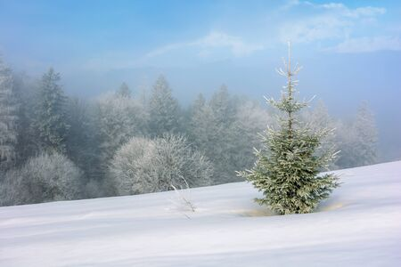 small fir tree on a snow covered slope. mysterious winter scenery in hazy weather conditions
