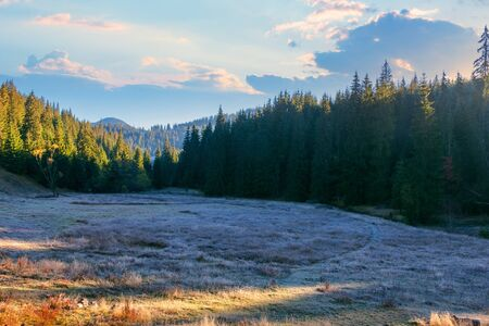 wonderful mountain landscape at sunrise in autumn. grassy meadow among the spruce forest. frosty and sunny morning in apuseni natural park, romania