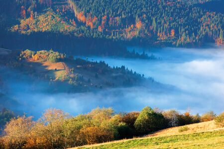 fantastic sunny morning in mountains. beautiful carpathian countryside in autumn. fog in the valley. trees in colorful foliage. green grass on the meadow.