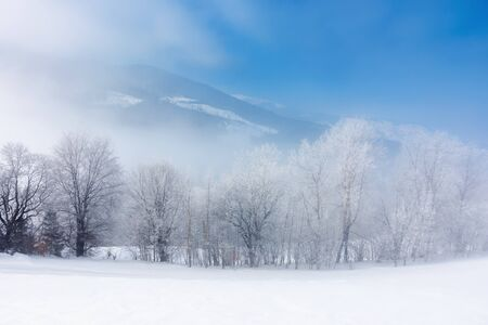 row of tees in hoarfrost on a snowy meadow.  fantastic winter scenery in misty weather at sunrise. fairy tale mountain landscape concept