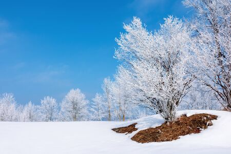 wonderful nature scenery on a sunny winter day. trees in hoarfrost around the snow covered meadow. bright blue sky. fantastic weather conditions