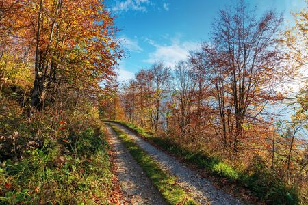 gravel road through autumn forest. path on the edge of a hill side. wonderful autumn weather at sunny forenoon Stock Photo