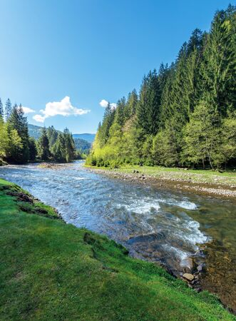 rapid mountain river in spruce forest. wonderful sunny morning in springtime. grassy river bank and rocks on the shore. waves above boulders in the water. white fluffy cloud on the blue sky Stock Photo