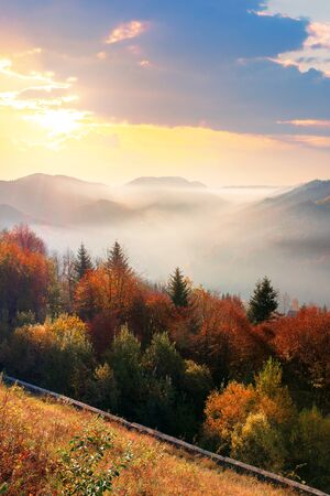 wonderful autumn sunrise in mountains. misty atmosphere with clouds on the sky. trees on the hillside in fall foliage. weathered grass on the slopes. fog rising from the distant valley