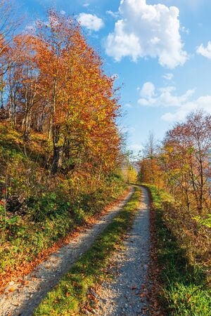country road through forest in autumn. beautiful nature scenery in the morning. orange and red foliage on the trees. blue sky with fluffy clouds