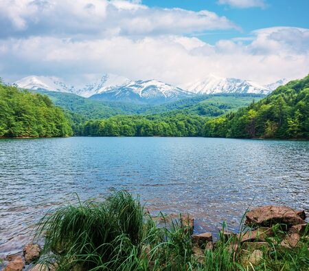 mountain lake in springtime. composite landscape of vihorlat lake an high tatas ridge of slovakia. sunny weather green foliage and snow capped peaks