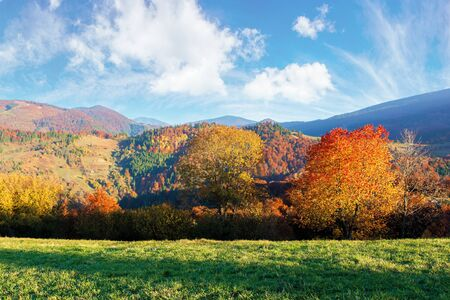 beautiful afternoon autumn scenery in mountains. sunny weather gorgeous sky. amazing nature background with trees in colorful foliage on the green grassy meadow Stock Photo