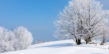 tees in hoarfrost on a snow covered meadow. fantastic winter panorama on a misty morning weather with blue sky. minimalism concept in fairy tale landscape Stock Photo