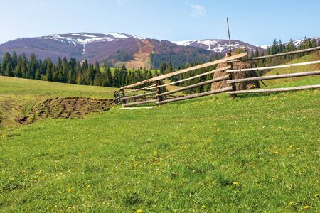 transcarpathian rural scenery in springtime. haystack behind the wooden fence on the grassy meadow. spruce forest on hills rolling in to the distant mountain. borzhava ridge with snow capped tops