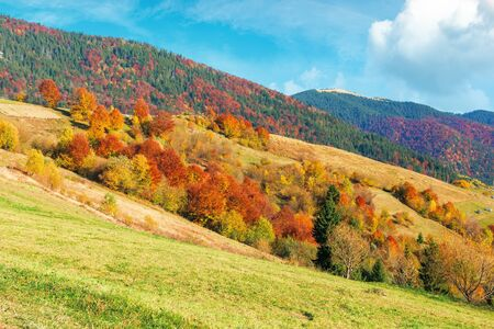 beautiful rural landscape of carpathian mountain. sunny weather with fluffy clouds on the sky. amazing vivid nature scenery with trees in colorful foliage on rolling hills Stock Photo
