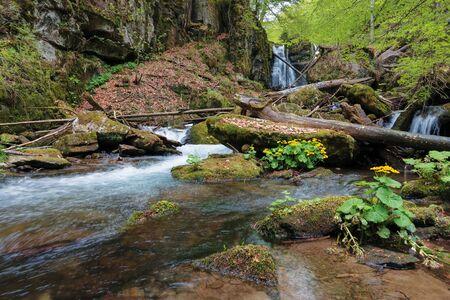 waterfall Voievodyn of ukrainian carpathians. powerful water stream of smooth polonyna. wonderful nature background with flowers in springtime