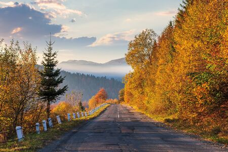 asphalt road through forested mountains. trees in fall foliage. foggy weather at sunrise. glowing clouds on the sky