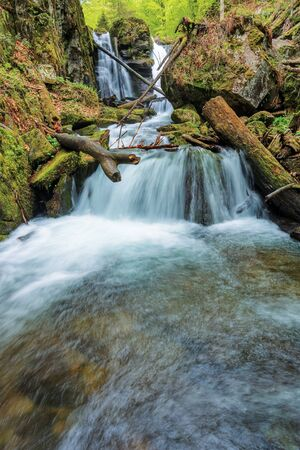 rapid stream of Voievodyn waterfall in the forest. beautiful nature scenery in springtime. green foliage on trees and moss on boulders. trunk above the flow on the stone